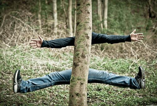 Et paf dans l'arbre