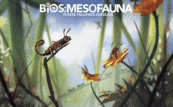 jeu Bios: Mesofauna de Phil Eklund - par Sierra Madre Games